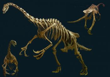 Nothronychus mckinleyi, skeleton