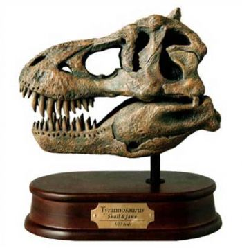 DinoStoreus Skulls in need of repair, broken & damaged