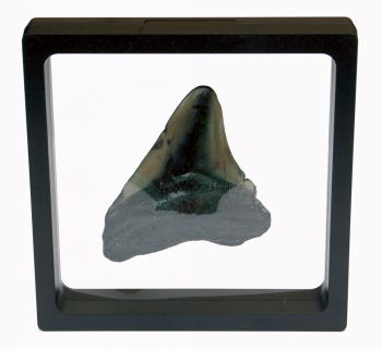 3D Floating Fossil Display Frames