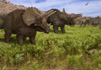 Triceratops, Poster NOW 25% OFF
