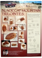 Trilobite Poster, Black Cat Mountain