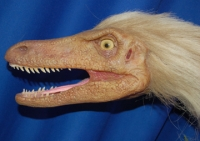 Velociraptor, fleshed-out head