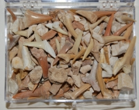 Fossil Shark Teeth Mix, box