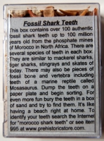 Fossil Shark Teeth, box