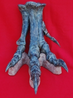 Allosaurus foot with base