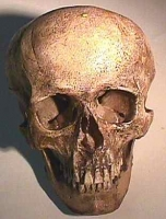 Homo sapiens, SW American Indian bound skull