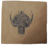 Eryon, Fossil Lobster or Crab