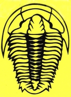 Trilobite Decal & Bumper Sticker