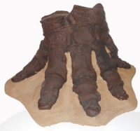 Mammut americanium, mastodon articulated foot