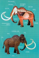 Woolly Mammoth 4D Vision Model