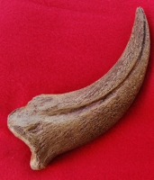 Spinosaurus, giant claw