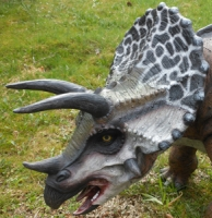 Triceratops life like model, AVAILABLE ONLY FOR RENT