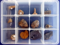 Fossil Collection, 12 Specimens