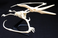 PteranodonTest-Tube Skeleton 11 Piece Kit