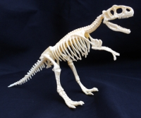 Tyrannosaurus Test-Tube Skeleton 9 Piece Kit