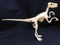 Velociraptor Test-Tube Skeleton 9 Piece Kit
