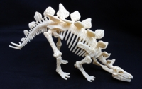 Stegosaurus Test-Tube Skeleton 9 Piece Kit