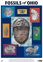 Fossils of Ohio, poster NOW 25% OFF