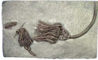Three Crinoid Species