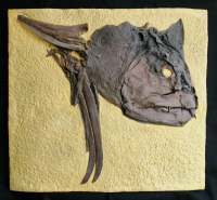 Xiphactinus audax, the X fish skull