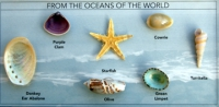 From The Oceans of the World 7 Specimen Kit