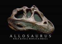 Allosaurus Skull, Wall Replica/Sculpture