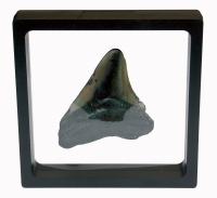 3D Floating Fossil Display Frames 3.5 x 3.5 Inch