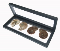 3D Floating Fossil Display Frames 9 x 3.5 Inch