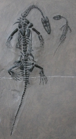 Keichousaurus hui, marine reptile Mother & Child