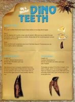 Dinosaur Tooth 1 of 6 (excavation kits available)