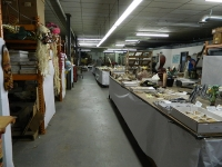 Dinosaur & Fossil Business Opportunity For Sale