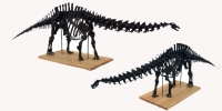 Apatosaurus Skeleton Assembled Model 1/12 scale by Phil Platt.