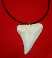 Carcharodon carcharias (Great White Shark) Tooth Pendant Replica