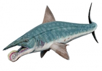 Helicoprion, whorl-tooth shark