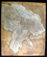 Archaeopteryx lithographica, first bird