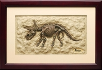 Triceratops skeleton 3D Framed Art