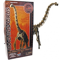 Brachiosaurus Skeleton, model with CD and 3D Glasses