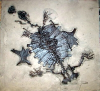 Trionyx, Giant Green River Fossil Turtle