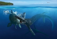 Arcelon & Tylosaurus, Poster NOW 25% OFF