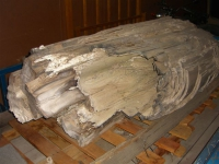 Petrified Fossil Tree Log