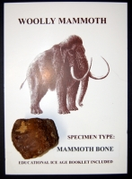Woolly Mammoth authentic fossil bone kit