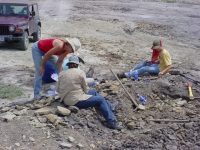 2018 Dinosaur Safari Dig & Keep Real Dinosaur Bones