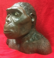 Australopithecus, early human bust