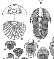 Exotic Trilobites of the World Poste