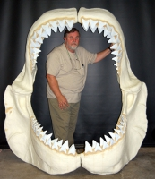 Megalodon Shark Jaws With Teeth